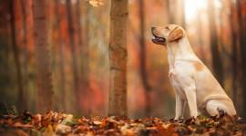 Dog Autumn Wallpaper For Desktop