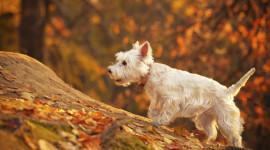 Dog Autumn Wallpaper Full HD