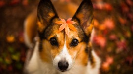 Dog Autumn Wallpaper Gallery
