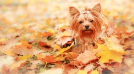 Dog Autumn Wallpaper HQ