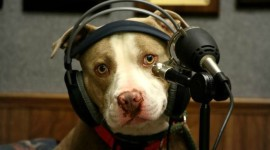 Dog Headphones Aircraft Picture