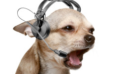 Dog Headphones Image Download