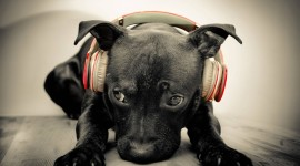 Dog Headphones Photo Download