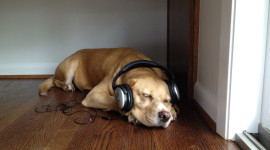 Dog Headphones Photo Free