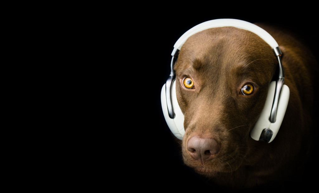 Dog Headphones wallpapers HD