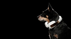 Dog Headphones Wallpaper 1080p