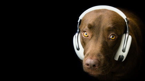 Dog Headphones wallpapers high quality