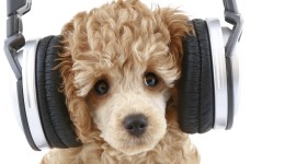 Dog Headphones Wallpaper For Desktop