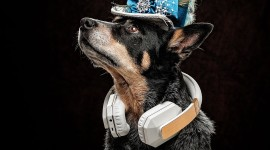 Dog Headphones Wallpaper For IPhone