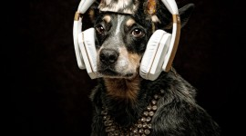 Dog Headphones Wallpaper For Mobile