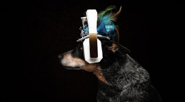 Dog Headphones Wallpaper For PC