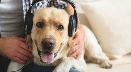 Dog Headphones Wallpaper Full HD