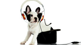 Dog Headphones Wallpaper Gallery