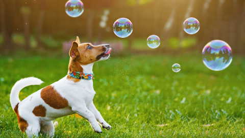 Dog Soap Bubbles wallpapers high quality