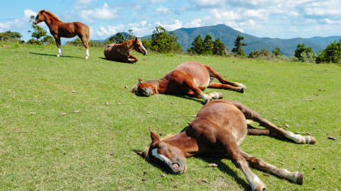 Horse Sleep wallpapers high quality