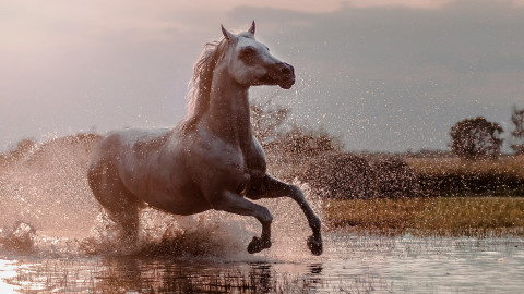 Horse Water Spray wallpapers high quality