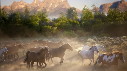 Horses Herd wallpapers high quality