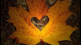 I Love Autumn Wallpaper For Android