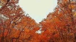 I Love Autumn Wallpaper For Mobile