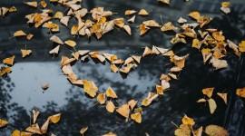 I Love Autumn Wallpaper Free