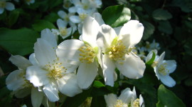 Mock Orange Desktop Wallpaper