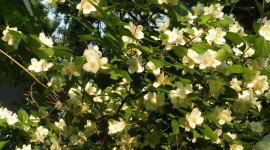 Mock Orange Desktop Wallpaper For PC