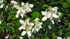 Mock Orange Desktop Wallpaper HD