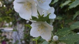 Mock Orange Wallpaper For Android