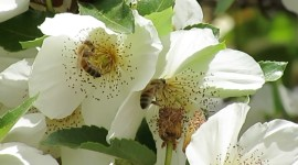 Mock Orange Wallpaper Free