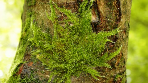 Moss Tree wallpapers high quality