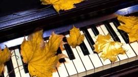Music Of Autumn Photo Free
