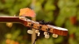 Music Of Autumn Wallpaper HQ