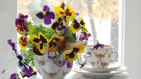 Pansies Vase wallpapers high quality
