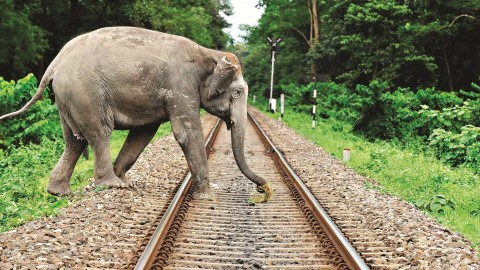 Railway Animals wallpapers high quality
