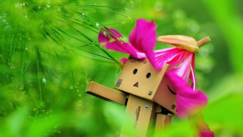 Robot Box Flowers wallpapers high quality