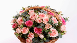 Roses In Basket Aircraft Picture