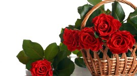 Roses In Basket Desktop Wallpaper HD