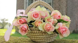 Roses In Basket Photo Download