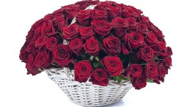 Roses In Basket Picture Download