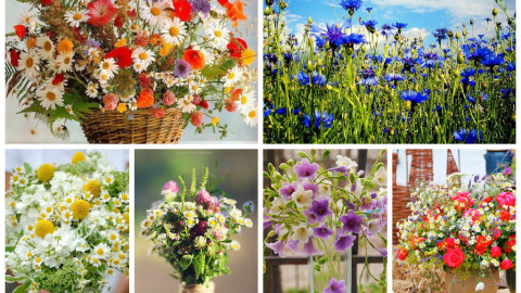 Wild Flowers Bouquet wallpapers high quality