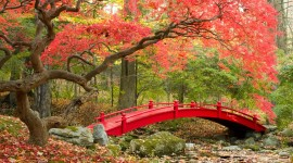 4K Autumn Bridge Image Download