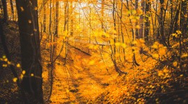 4K Autumn Bridge Photo Download
