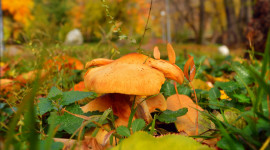 4K Autumn Mushrooms Photo