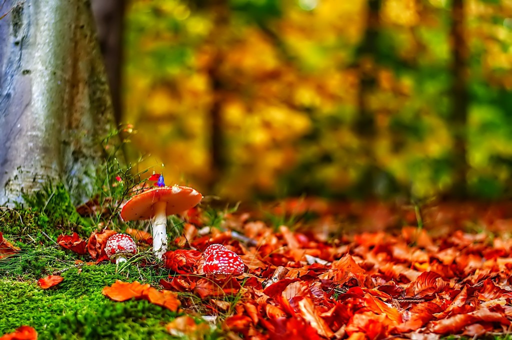 4K Autumn Mushrooms wallpapers HD