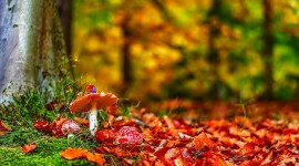 4K Autumn Mushrooms Wallpaper