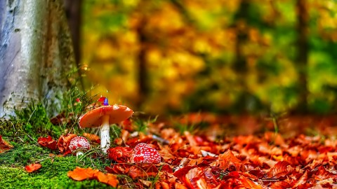 4K Autumn Mushrooms wallpapers high quality