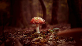 4K Autumn Mushrooms Wallpaper For Desktop