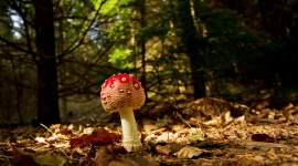 4K Autumn Mushrooms Wallpaper For PC