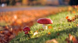 4K Autumn Mushrooms Wallpaper Free