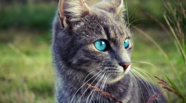 4K Big Blue Eyes Photo#1